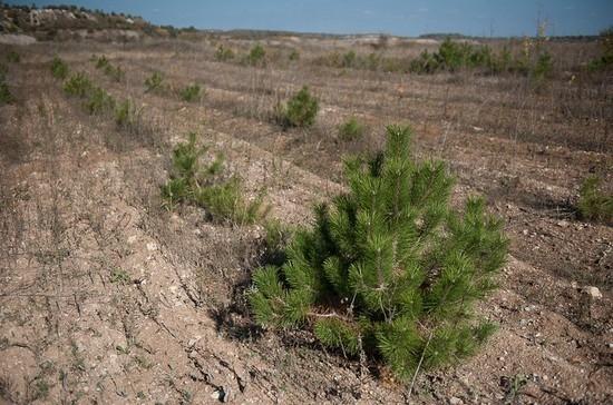 Рекультивацию земель оградят от населения