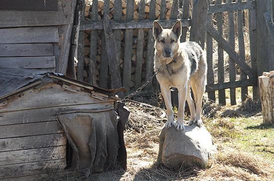 Госдума приняла закон о ветеринарном надзоре