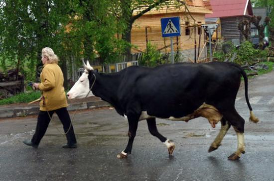 Павлова опровергла подготовку законопроекта об увеличении рабочей недели жительниц села