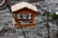 В мире отмечают Международный день птиц