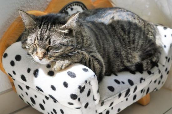 В Госдуме согласились с предложением запретить продажу кошек и собак в зоомагазинах