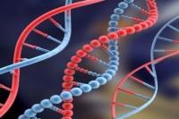 Зачем ДНК свой праздник