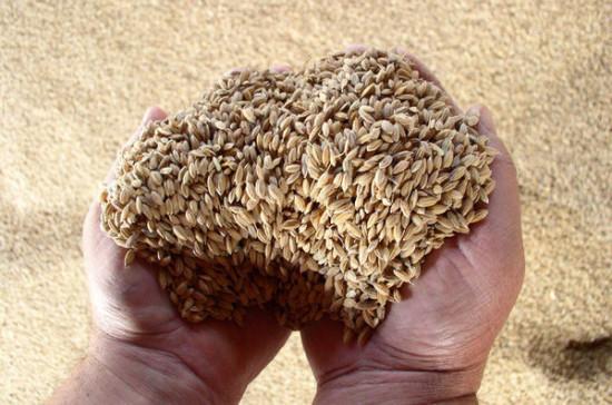 Минсельхоз предложил продлить действие нулевой пошлины на экспорт пшеницы
