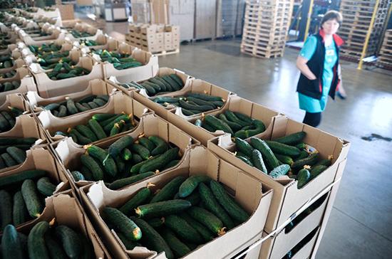 В подмосковных теплицах собрали свыше 30 тонн овощей