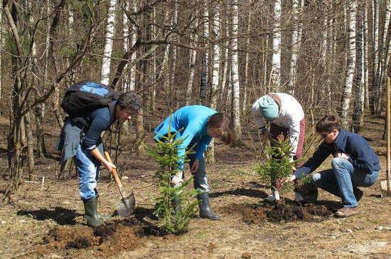 День посадки леса пройдёт в России в девятый раз