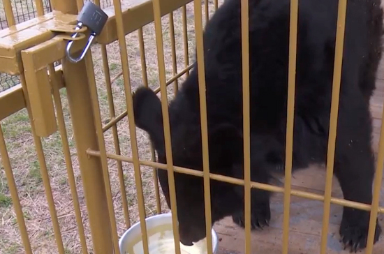 В Приморье появился первый приют для медведей
