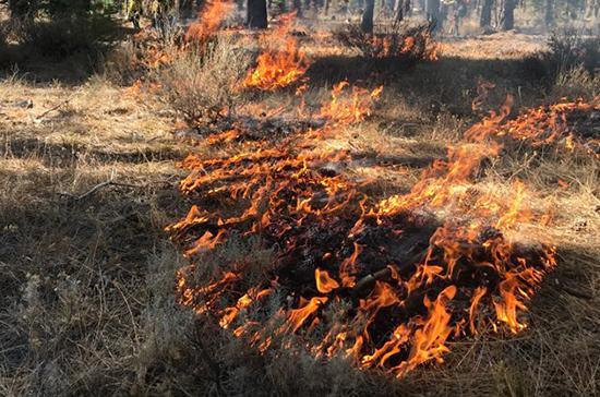 МЧС предупредило жителей Оренбуржья о высокой пожароопасности 21 мая