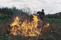 В России станет больше лесных инспекторов
