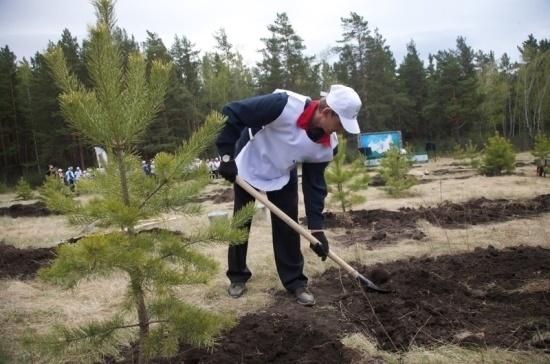 Красноярские депутаты требуют повысить эффективность лесного комплекса