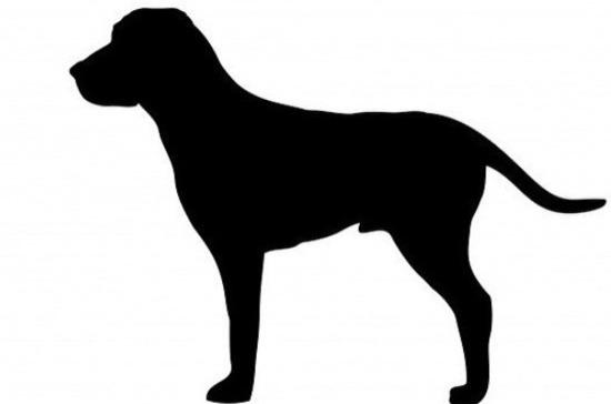 Жителям Саратова предложили придумать кличку для щенка спикера Госдумы