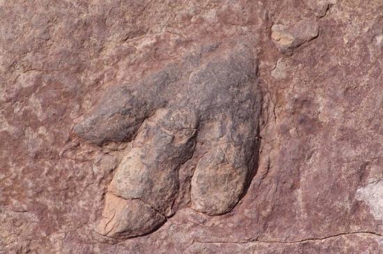 Учёные обнаружили новый вид динозавров с необычным клювом