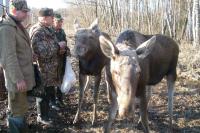 Лишний сбор с охотничьих хозяйств могут отменить