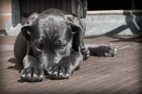 Бездомным кошкам и собакам хотят выделить квадратные метры