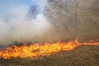 Читатели «Парламентской газеты» назвали виновных в лесных пожарах