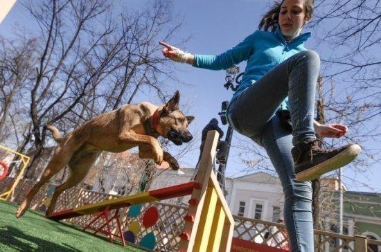 Застройщиков предлагают обязать создавать площадки для собак в новых дворах