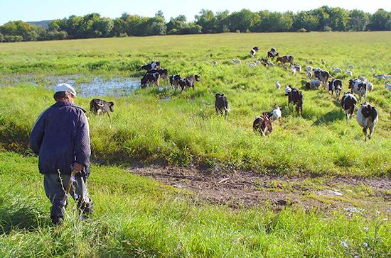 Бывшим сельхозработникам предложили сохранить надбавку к пенсии при переезде в город