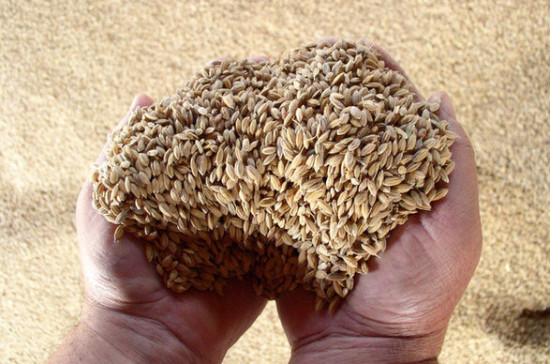 Минсельхоз сохраняет прогноз по урожаю зерна в 2019 году