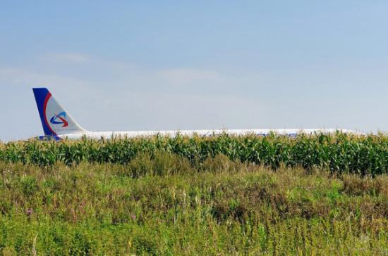 В Минэкологиии Подмосковья опровергли предположение, что причиной ЧП с А-321 стали свалки