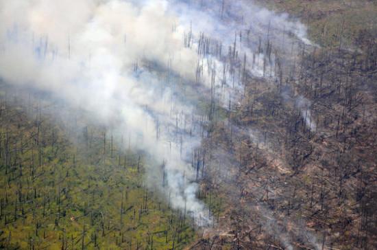 Рослесхоз оценил ущерб от лесных пожаров