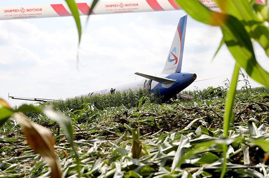 Аэропорт Жуковский начал работу по улучшению орнитологической защиты