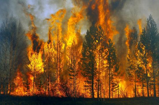 В МЧС назвали текущую площадь лесных пожаров в России