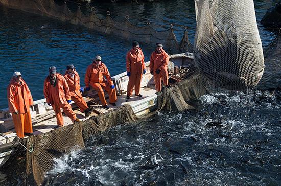 Рыболовные хозяйства получат новые права