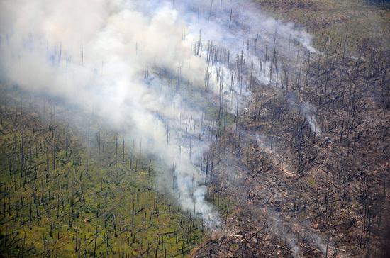 В Рослесхозе сообщили о количестве лесных пожаров в 2019 году