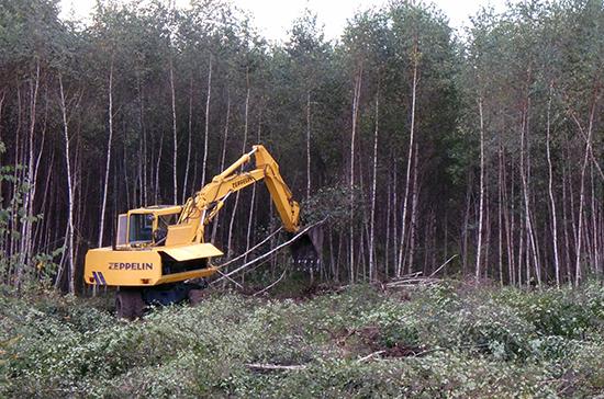 В Госдуме обсудят, как спасти лесной фонд