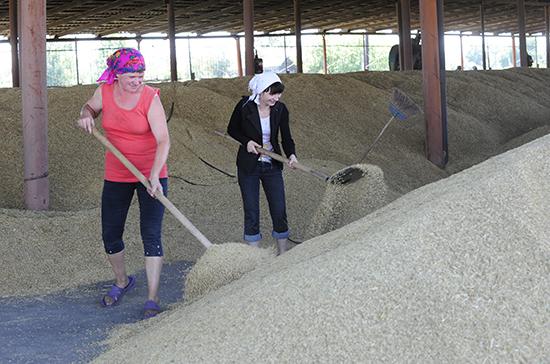 Путин сократил рабочий день для женщин в селах