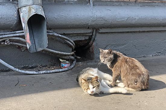 Ветеринары привезли бездомных животных из Луганска в Екатеринбург
