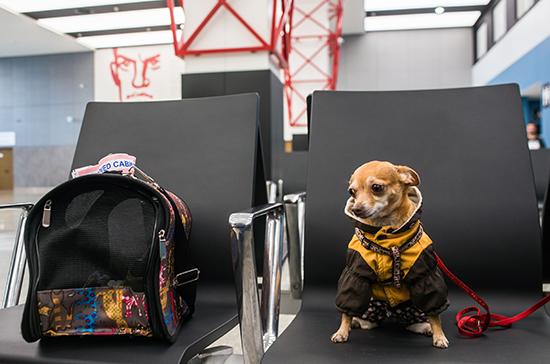 У животных могут появиться свои авиабилеты