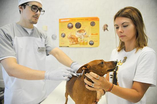 Маркировка животных поможет выявить нерадивых владельцев