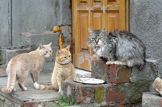 Кошки перестанут мёрзнуть на улицах
