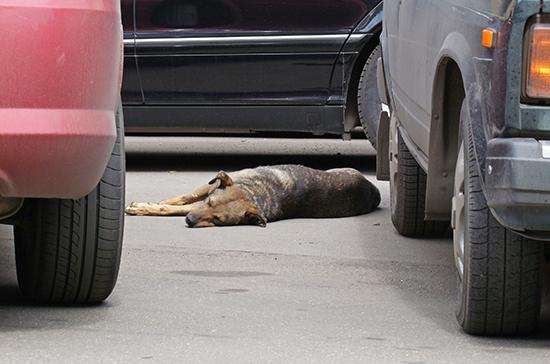 Бездомных собак промаркируют в приютах