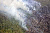 Минприроды подготовило поправки о тушении труднодоступных лесных пожаров