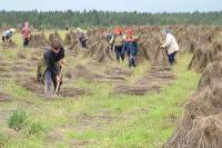 Производителей льна простимулируют субсидиями и землёй