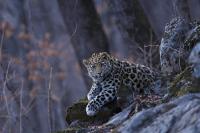 Нацпарк «Земля леопарда» увеличится на 7 тысяч га