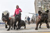 Какие новшества ожидают владельцев собак и контактных зоопарков