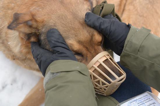 В России изменились правила выгула собак опасных пород