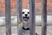 Владельцев животных смогут проверять в случае жалоб на жестокое обращение