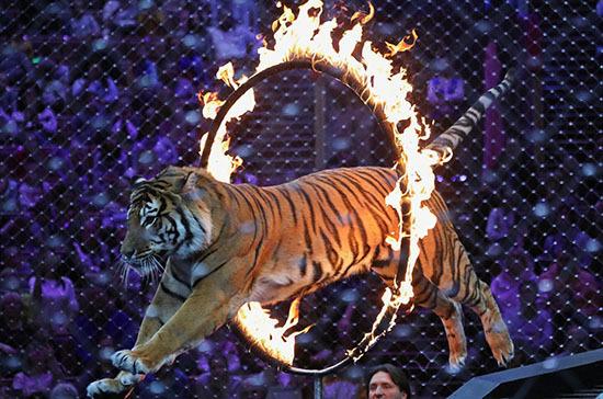 Медведев утвердил требования по использованию животных в цирках
