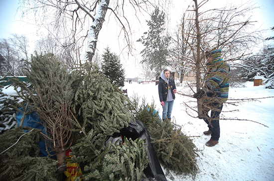 Жители Санкт-Петербурга смогут отправить новогодние ёлки на переработку