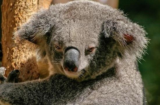 Эксперт назвал причины экологического кризиса в Австралии