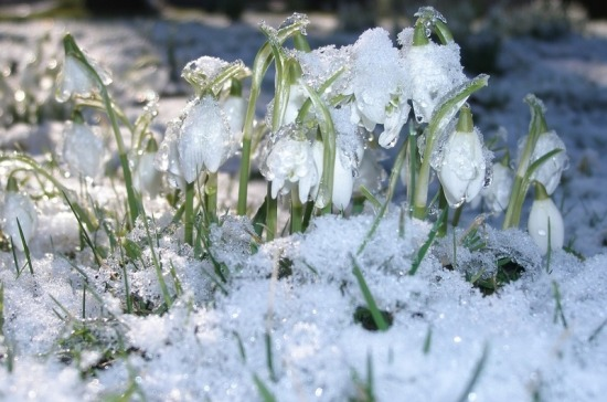 Синоптики спрогнозировали россиянам «весну в середине зимы»