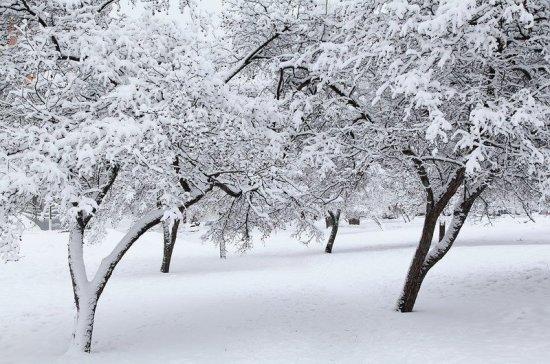 Метеоролог: настоящая зима в Москву всё ещё может прийти