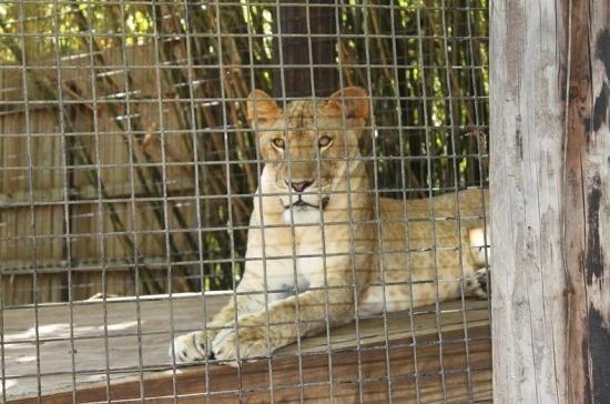 Россельхознадзор подготовил регламент по надзору за содержанием животных в цирках и зоопарках