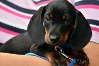 СМИ: правкомиссия одобрила проект о маркировке и учёте домашних животных