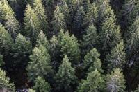 Счётная палата проверила эффективность использования лесных ресурсов