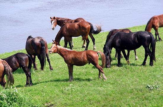 У чиновников изъяли племенных лошадей