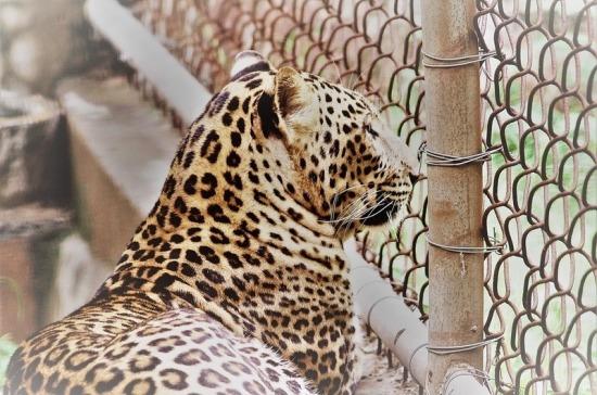 Россельхознадзор подготовил порядок лицензирования цирков и зоопарков